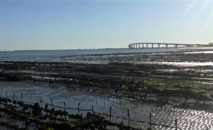 Surveillance sanitaire des zones de production de coquillages